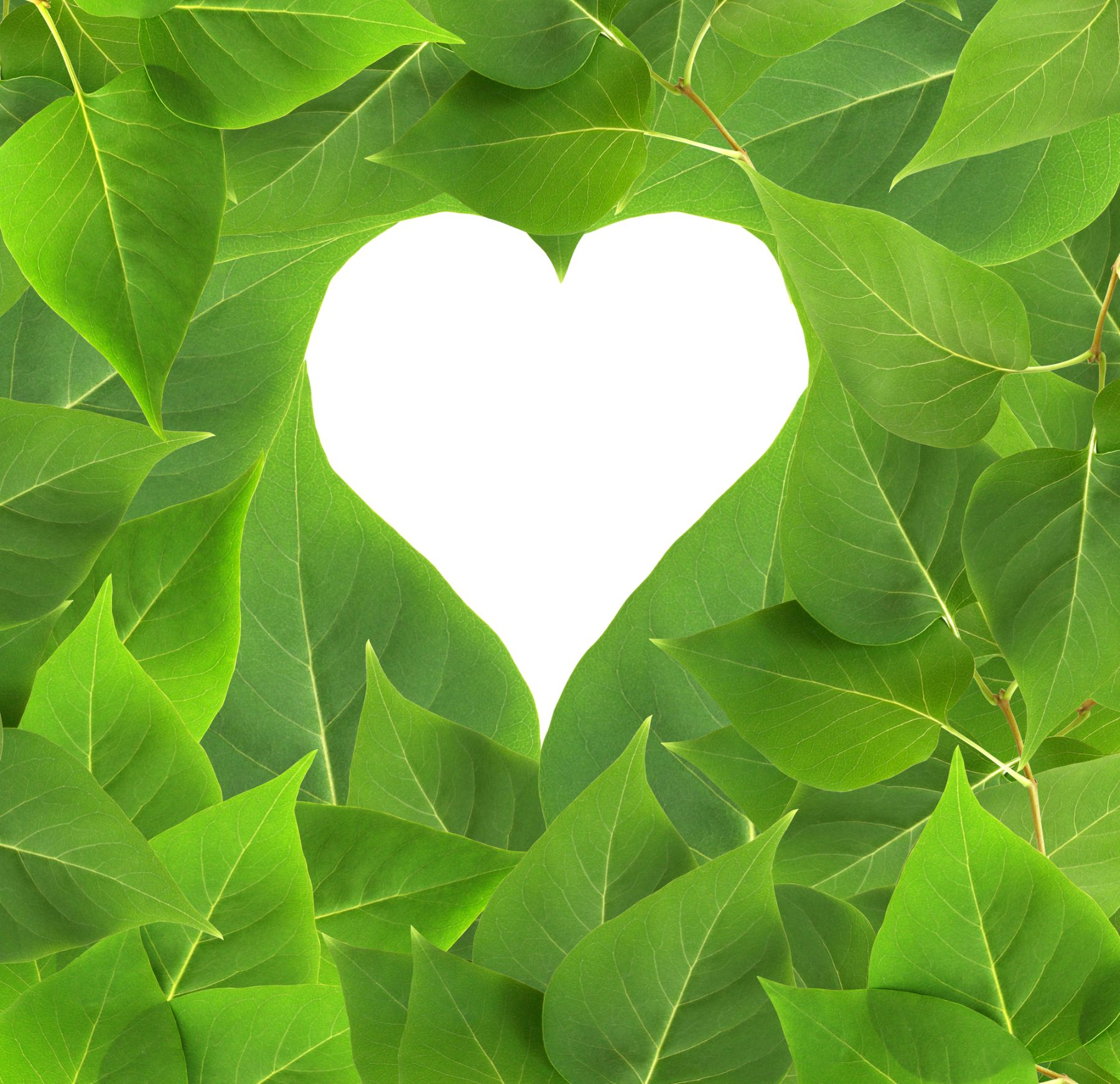 Leaves surrounding heart with white background
